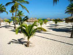 Manchebo Beach-palmtrees