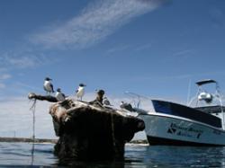 003 pelicans