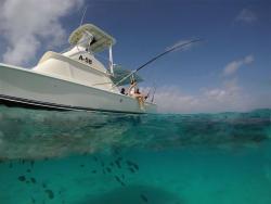 carla charters underwater aruba island.jpg