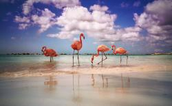 03 - Renaissance Island -Flamingo Beach.jpg