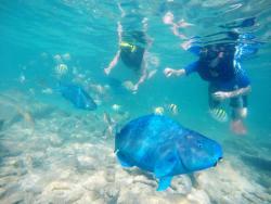 De Palm Island - Snorkel.jpg