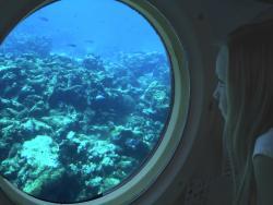 Atlantis Submarine View-min.jpg