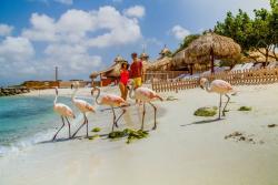 DPI-Flamingoes.jpg