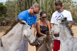 Baby Beach Off Road Safari - Donkey Sanctuary.jpg